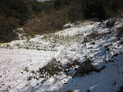 hatayuki2012-3.jpg