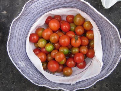 tomatoaki.jpg